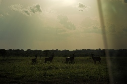 Murchison Falls National Park, June 2010
