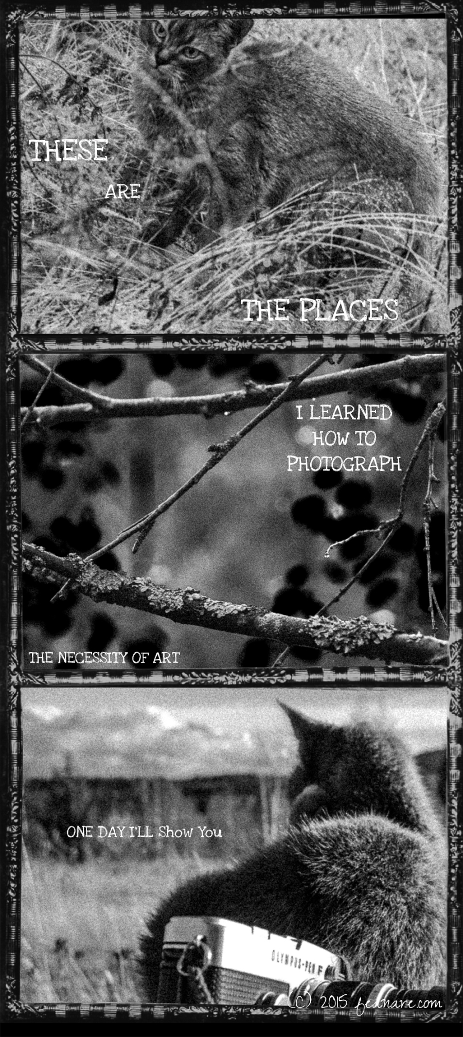 The Photographer Cat: These are the places I learned how to photograph -  the necessity of art. One day I'll show you. (c) 2015 feanare.com